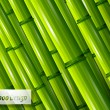 Stock Vector: Green bamboo background