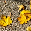 Autumn yellow foliage asphalt — Stock Photo