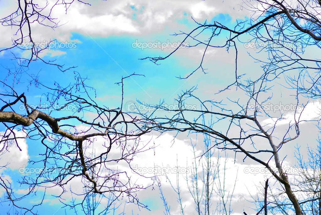 Nacked branches tree on blue sky — Stock Photo #10454567