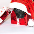 Stock Photo: Small puppy in New Year's cap in gift box