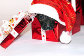 Small puppy in a New Year's cap in a gift box — Stok fotoğraf