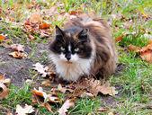 Cat in autumn — Stock Photo