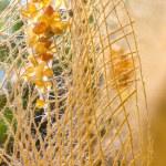 Yellow amber decorative ropes — Stock Photo