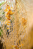 Gul bärnsten dekorativa rep — Stockfoto