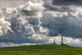 Withered tree and a swing in the overcast sky in the background — Stock Photo
