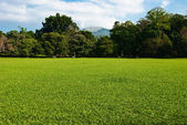 Green grass meadow with trees and mountain — Stock Photo