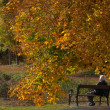 Stock Photo: Autumn bench