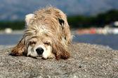 Abandonned dog — Stock Photo