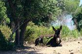 科西嘉的风景 — 图库照片