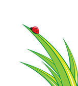 Ladybug on green grass — Stock Vector