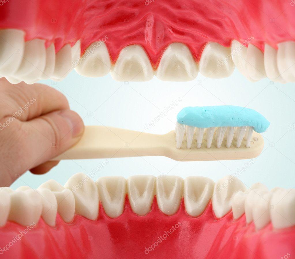 Bouche de lint rieur et de la brosse dents for Interieur de la bouche