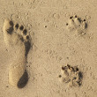 Footsteps  of a dog and a man at the beach — Stock Photo