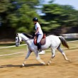 Female rider trains the horse in the riding course - Foto Stock