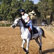 Female rider trains the horse in the riding course - Stock Photo