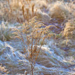 Frozen plants in meadow with backlight in wintertime — Stock Photo