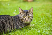 Cute cat lying in the grass of the garden — Stock Photo