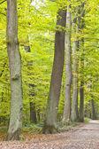 Beautiful wild oak forest — Stock Photo