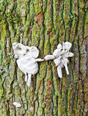 Man and wife out of chewing gum posted at a tree — Stock Photo