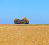 Natural full frame background with wtree and field after harvest — Stock Photo
