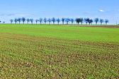 Freshly ploughed acre with row of trees at the horizon — Stock Photo