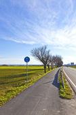Ciclovia com árvores e rua — Foto Stock