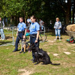 Stock Photo: Police dogs show their discipline