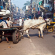 OX chart in the narrow streets of old Delhi - Foto Stock