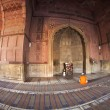 Man praying in the mosque Jama Masjid in Delhi - Stock Photo