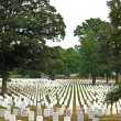 Graves at Arlington national Cemetery in Washington - Lizenzfreies Foto