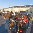 Постер, плакат: Horse drawn fiaker at the Hofburg for tourists in Vienna