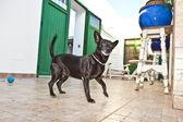 Dog has fun playing in the patio — Stock Photo