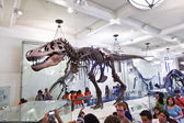 Dinosaur skeletton in the American Museum for National History — Stockfoto