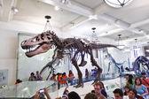 Skeletton dinosauro al museo americano di storia nazionale — Foto Stock
