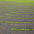 Field with irrigation system on volcanic lapilli ground - Stock Photo