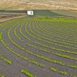 Field with irrigation system on volcanic lapilli ground — Stock Photo
