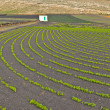 Stock Photo: Field with irrigation system on volcanic lapilli ground