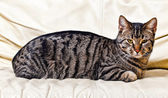 Cat resting on the sofa — Stock Photo