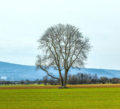 Lonely tree in the field — Stockfoto