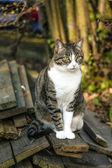 Small kitten in the garden — Stock Photo