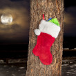 Christmas stocking on pine tree - Stock Photo