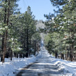 snow covered road — Stock Photo