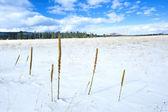 Desierto cubierto de nieve — Foto de Stock