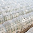 Vegetable greenhouse - Stock Photo