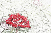 Red rose. — Stock Photo