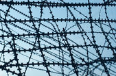 Barbed wire. — Stock Photo
