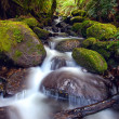 Stock Photo: Rainforest Cascade