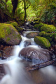 Rainforest Cascade — Stock Photo