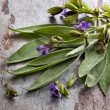 Flowering Sage — Stock Photo #8616084