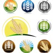 Wheat icon collection — Stock Vector