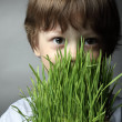 Boy with grass, studio shot — Stock Photo
